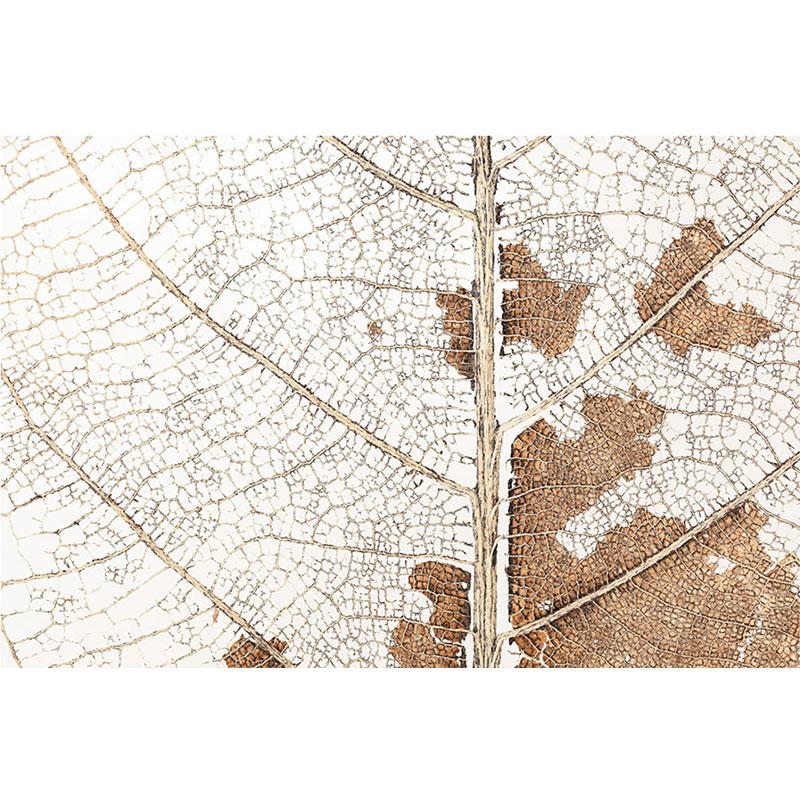 کاغذ دیواری کلاسیک تک برگ پاییزی